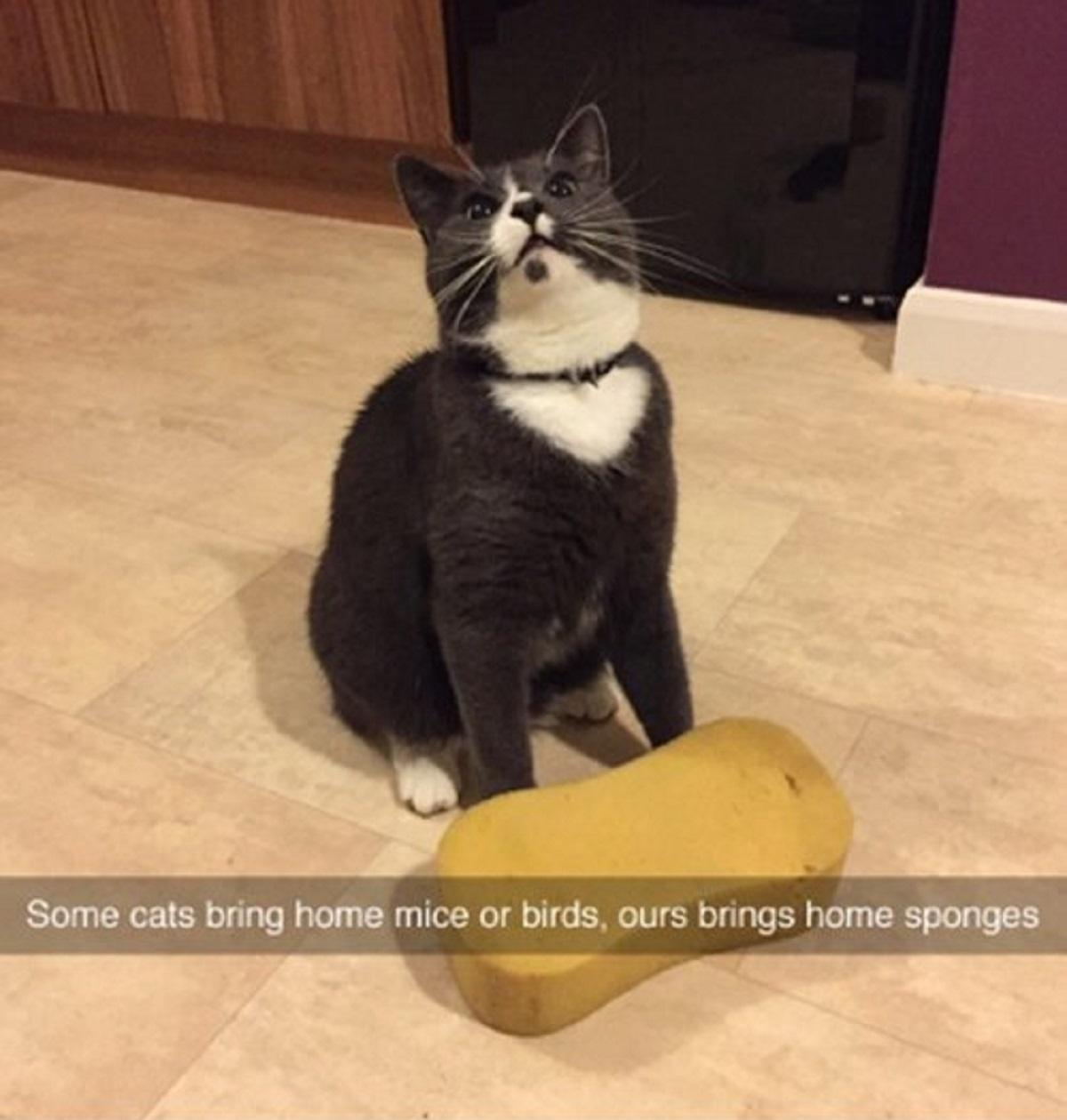 gatto porta spugne