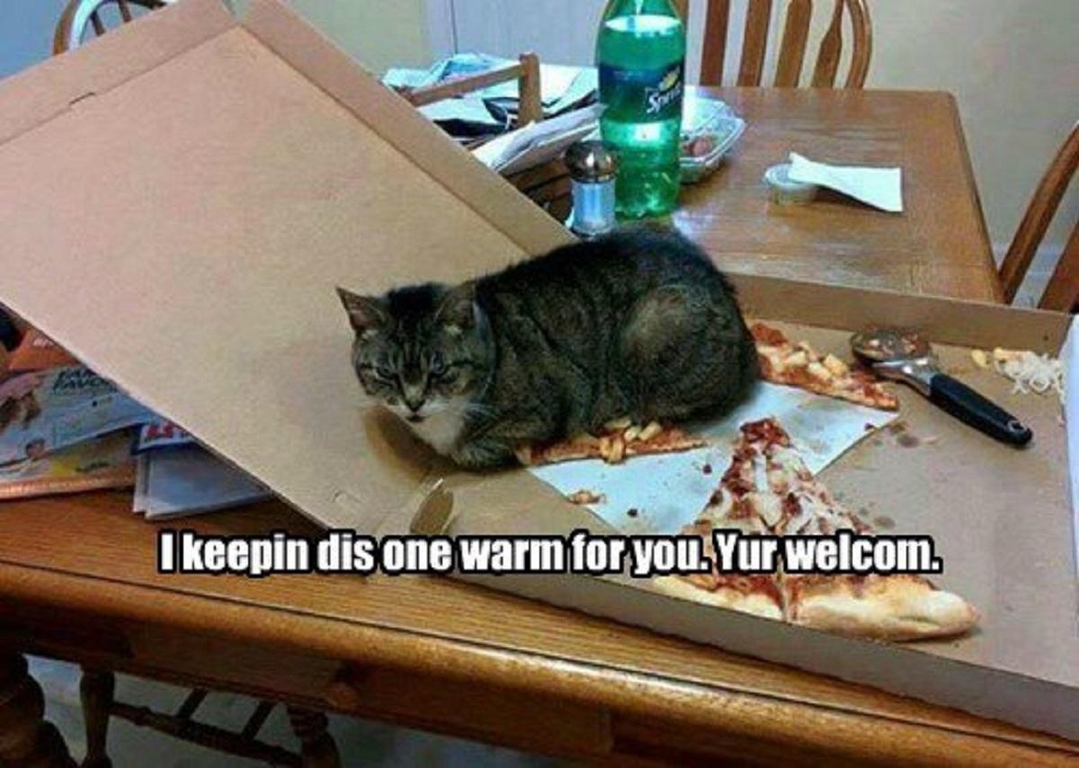 10 foto esilaranti di gatti-gatto pizza