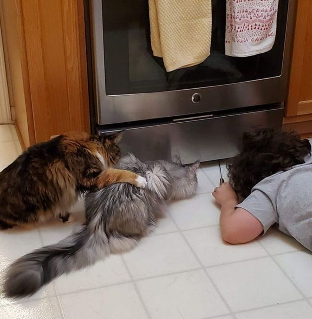 gatti che cercano i loro giochi