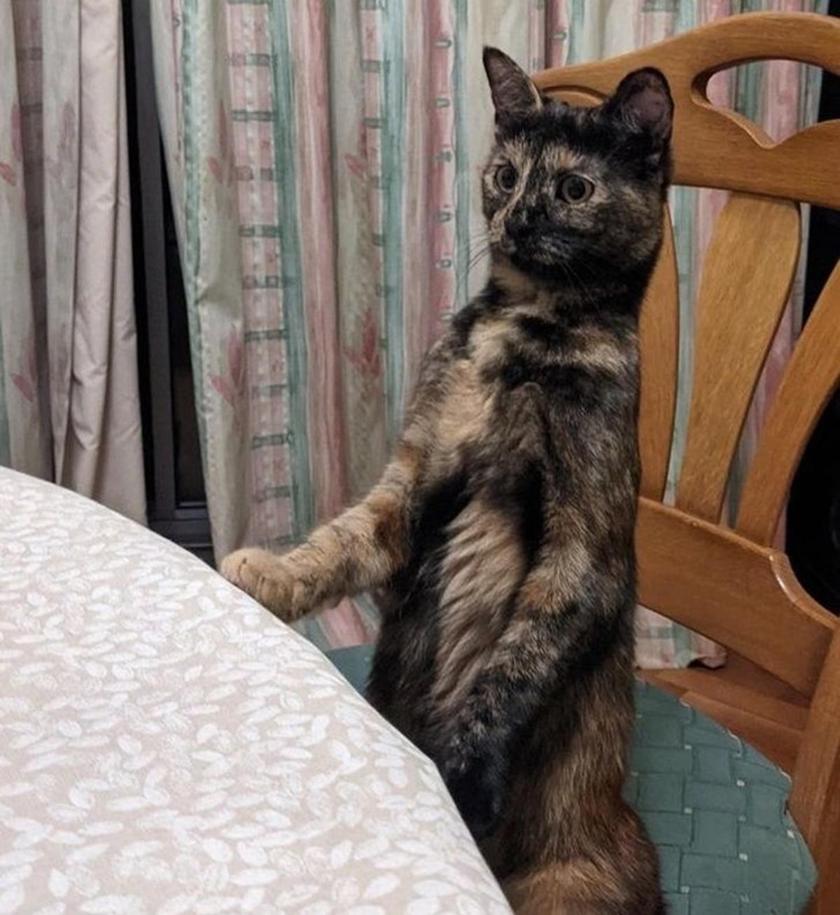 10 gatti che hanno avuto un passato da umano-gatto che aspetta la cena