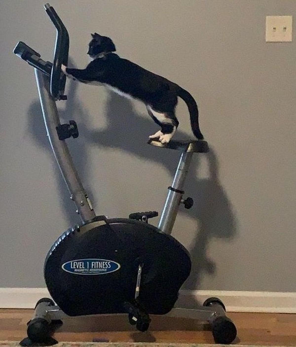 gatto che si allena