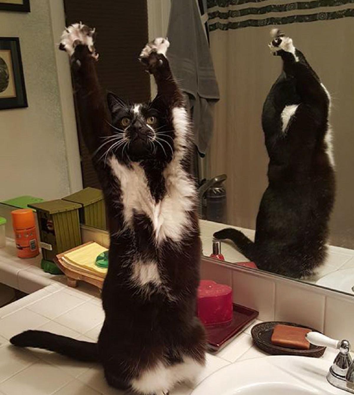 10 gatti che si comportano in maniera inspiegabile-zampe in alto