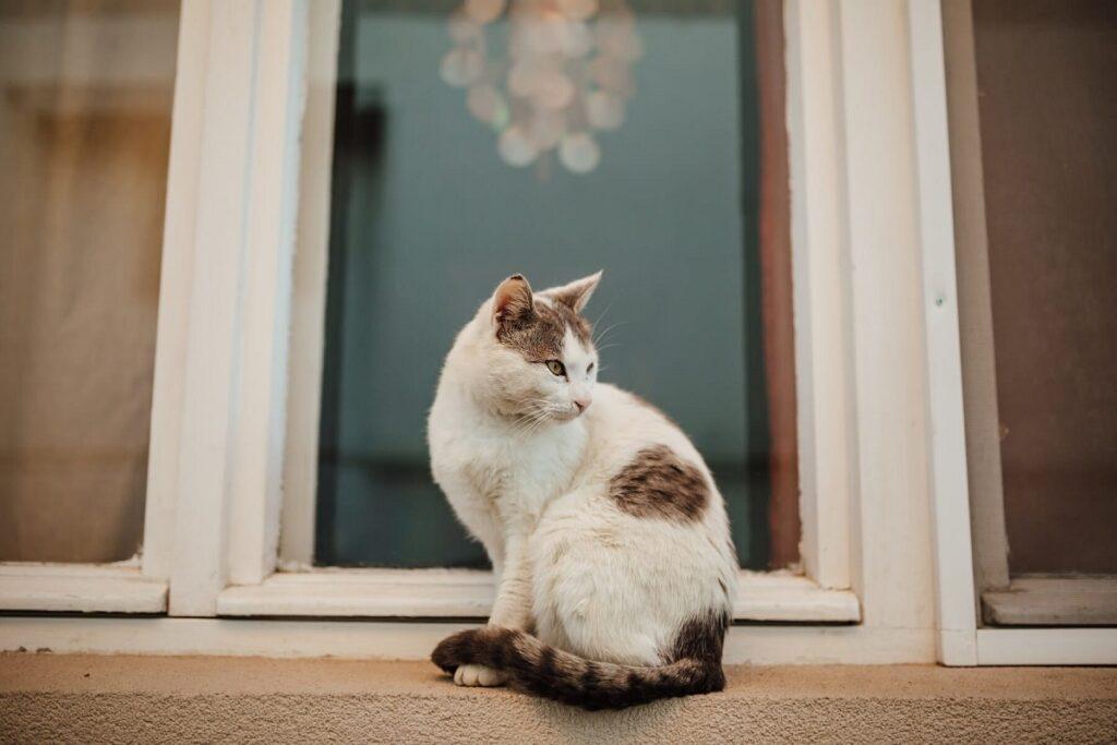 gatto odia profumo