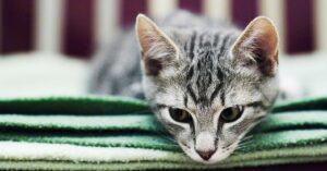 modi di fare gatto