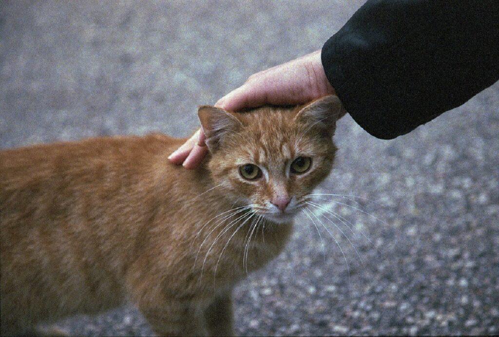 gattino micio aiuto