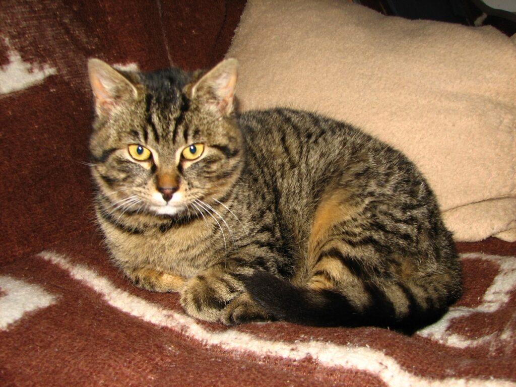 gatto divano casa