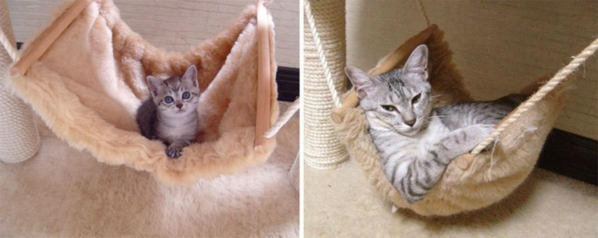 gatto sull'amaca