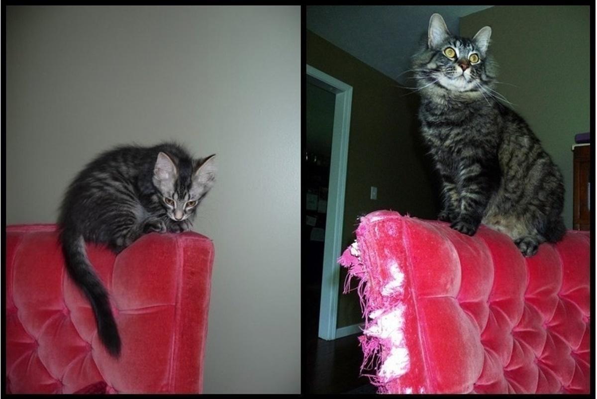 10 prima e dopo di gatti-gatto sul divano