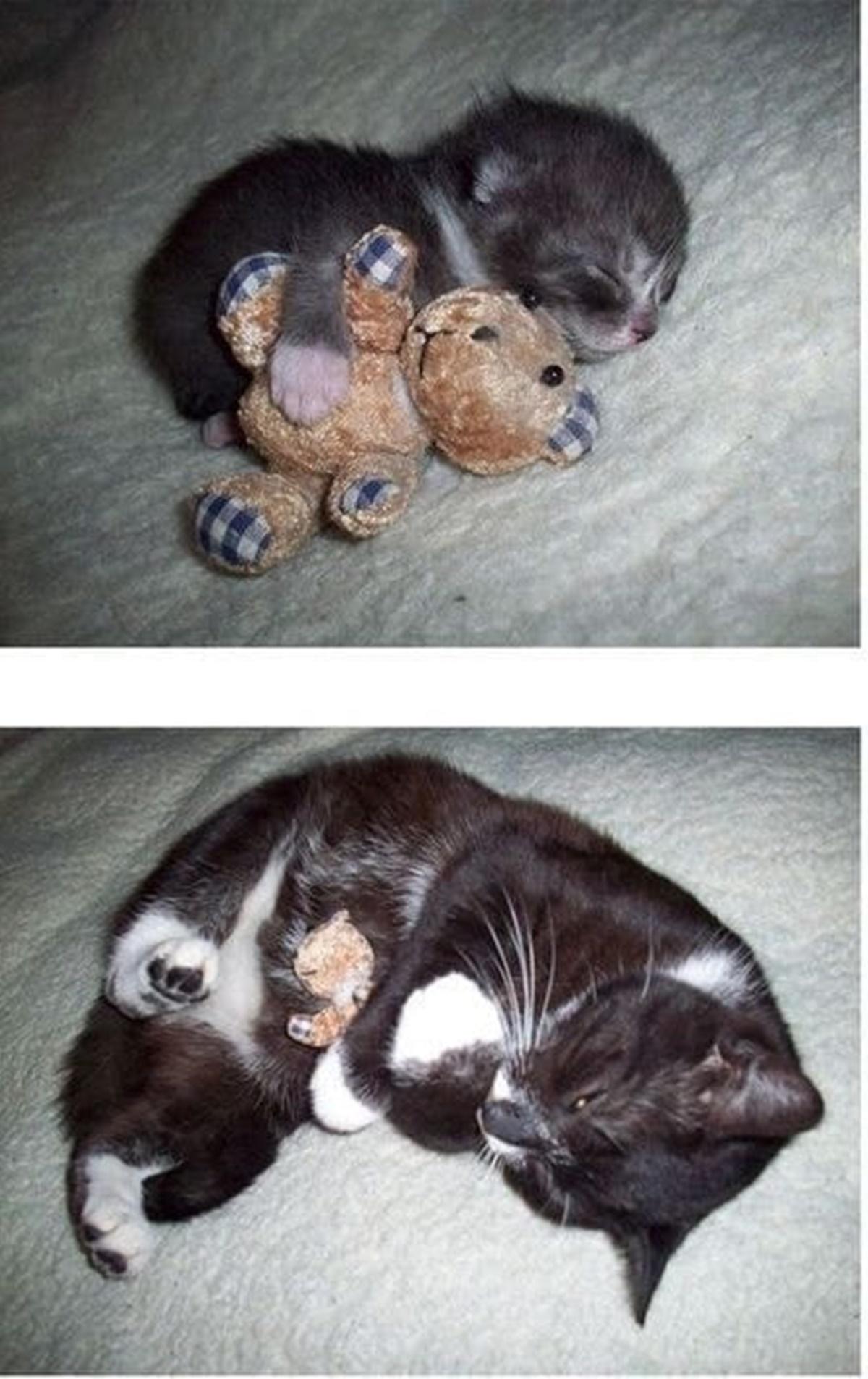 10 prima e dopo di gatti-gatto che abbraccia giochino