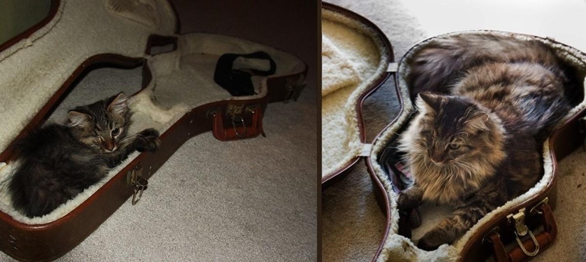 10 prima e dopo di gatti-gatto nella custodia