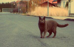 gatto strada grigio