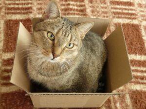 gatto posto preferito