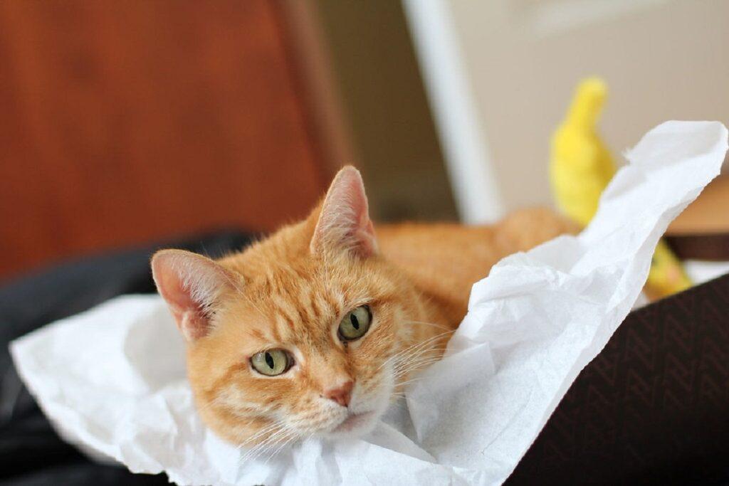 gatto sdraiato relax