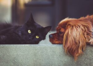 gatto cucciolo insieme