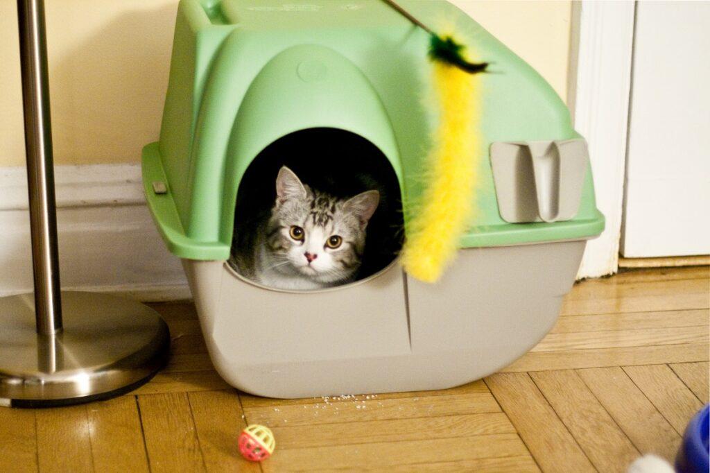 idee gatti giocare