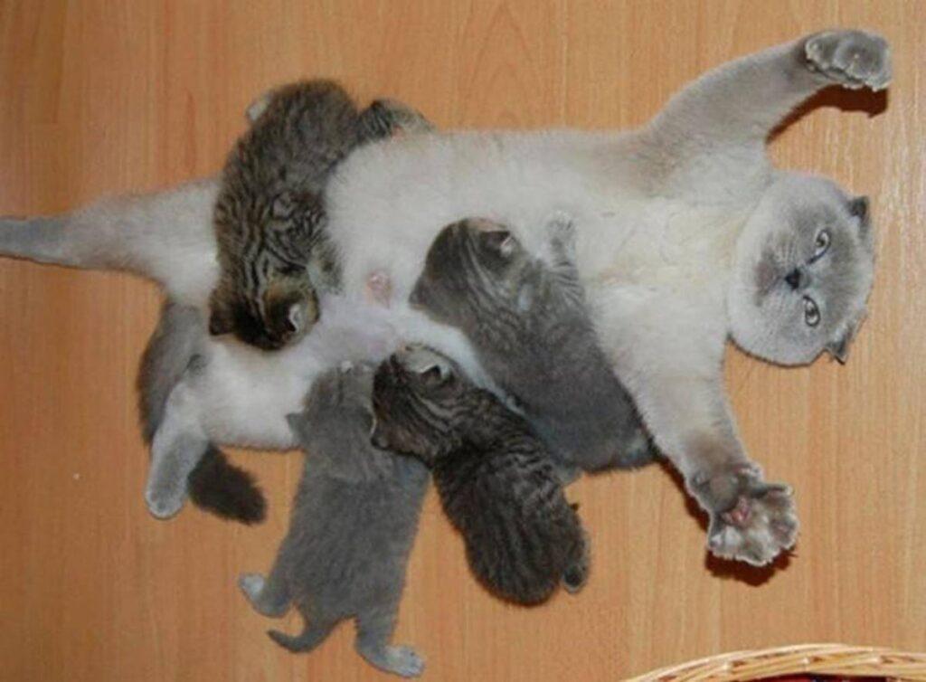 gatta con gattini