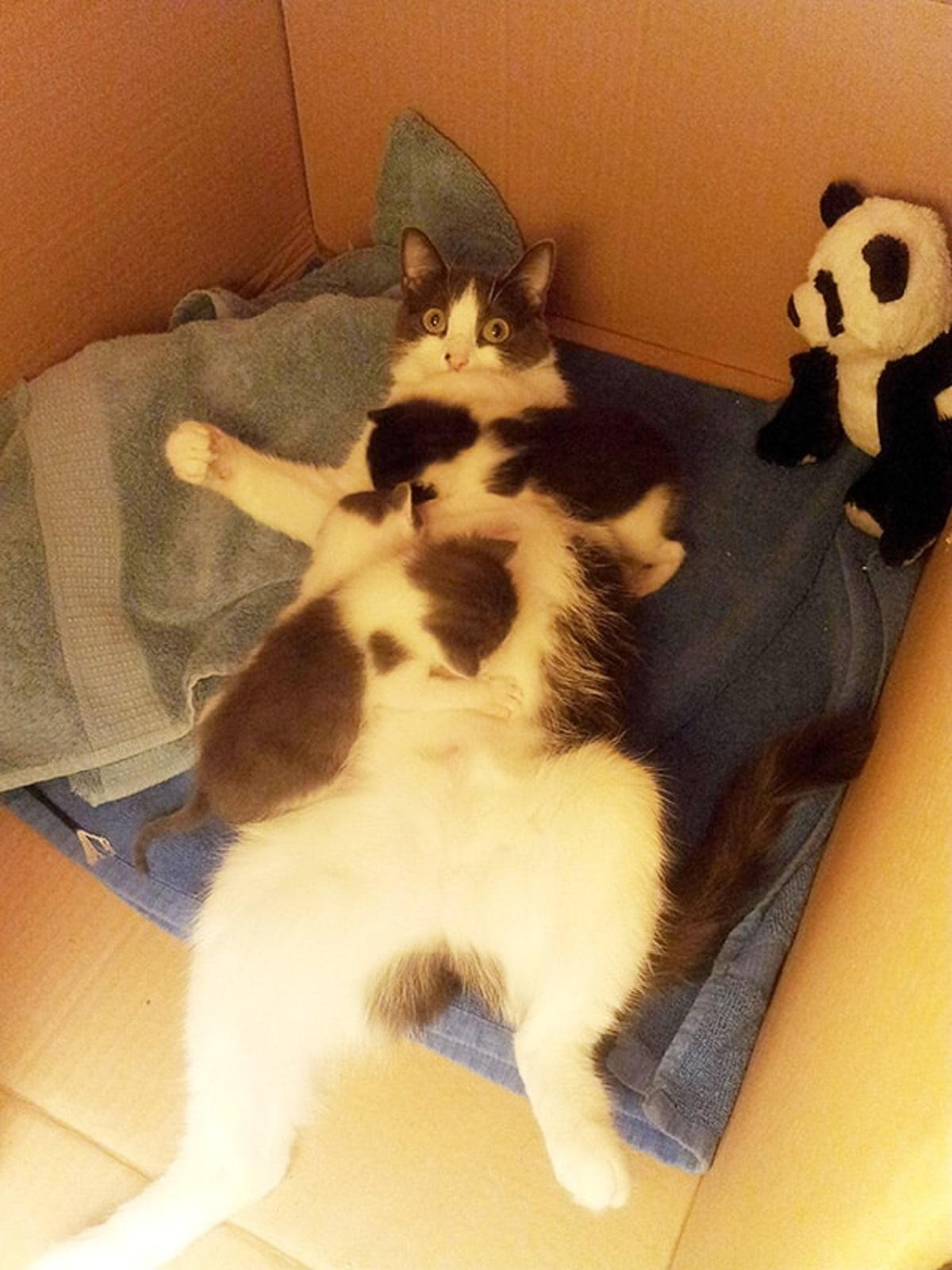 6 foto di gatte-riposo no