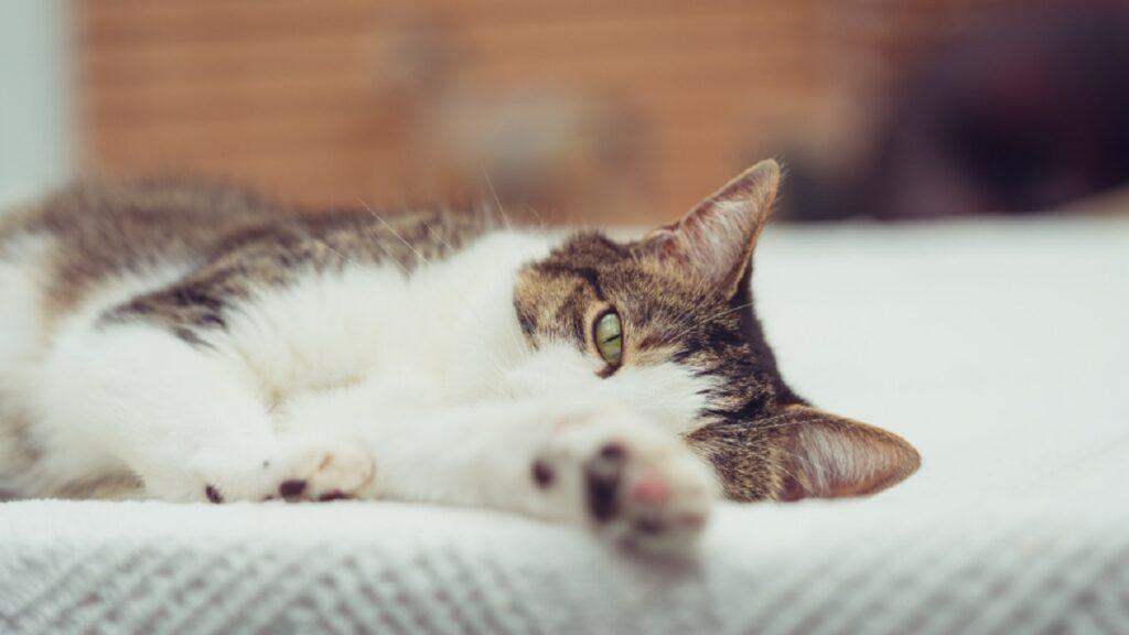 gatto dimagrisce causa