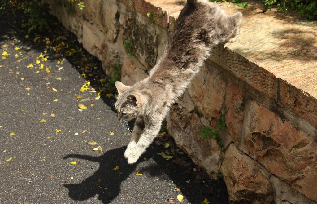 atterra gatto zampe