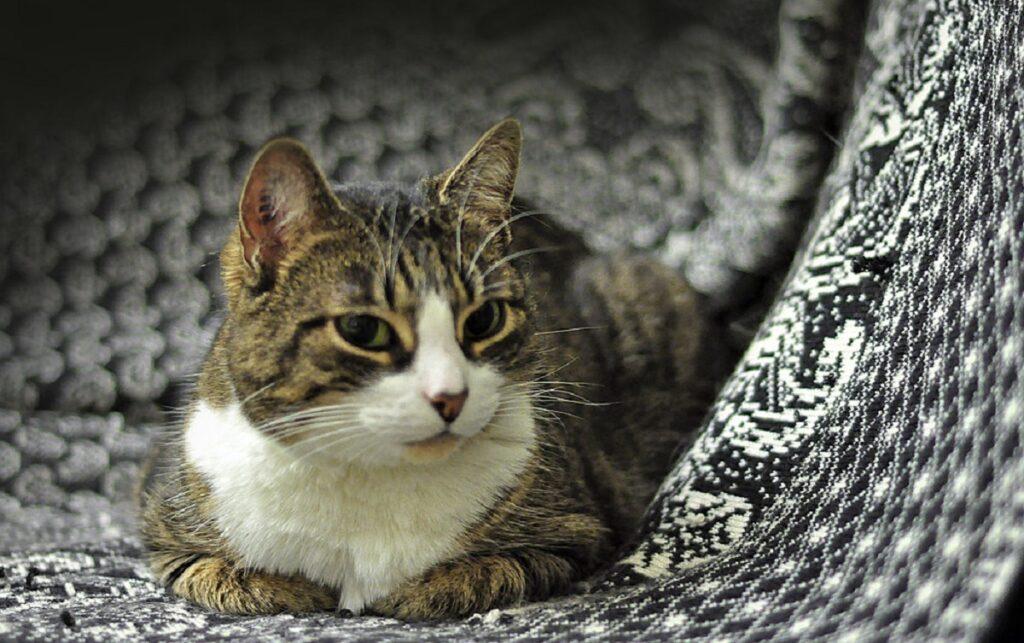 gatto casa divano