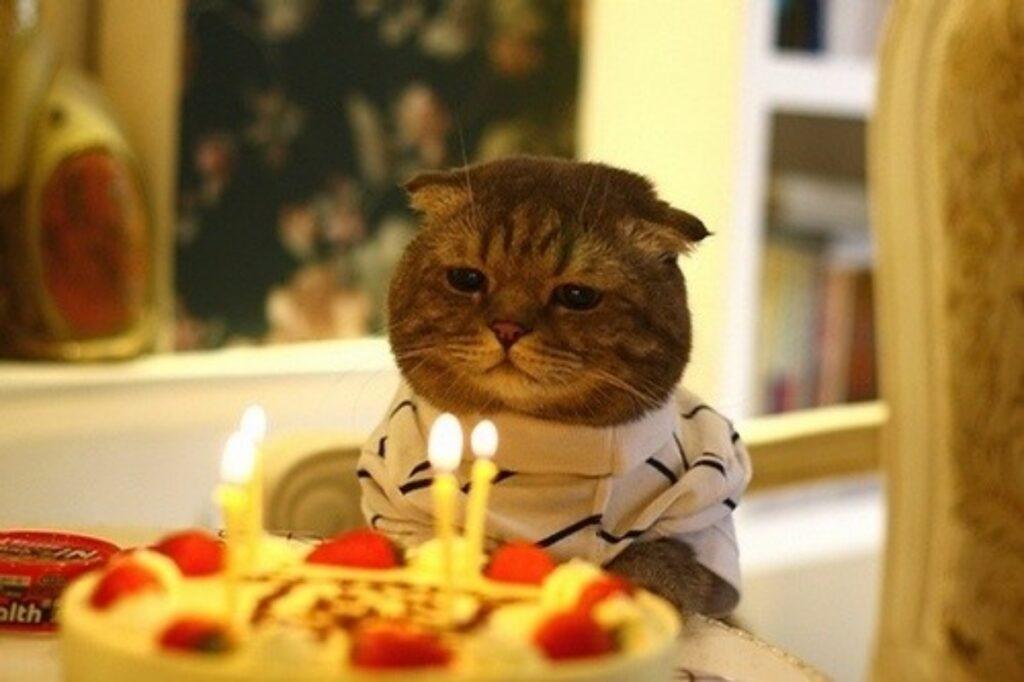 gatto candeline torta
