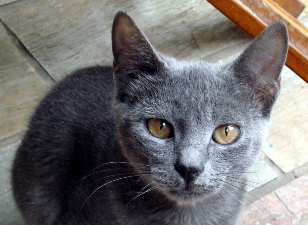 gatto immagine dolce