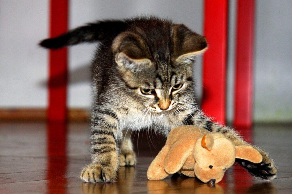 giocattoli scegliere gatto
