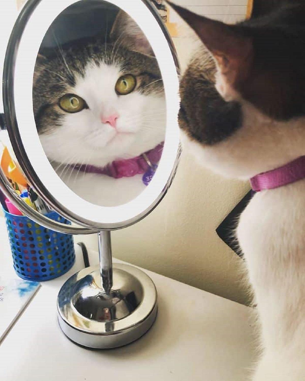 8 foto di gatti-gatto allo specchio