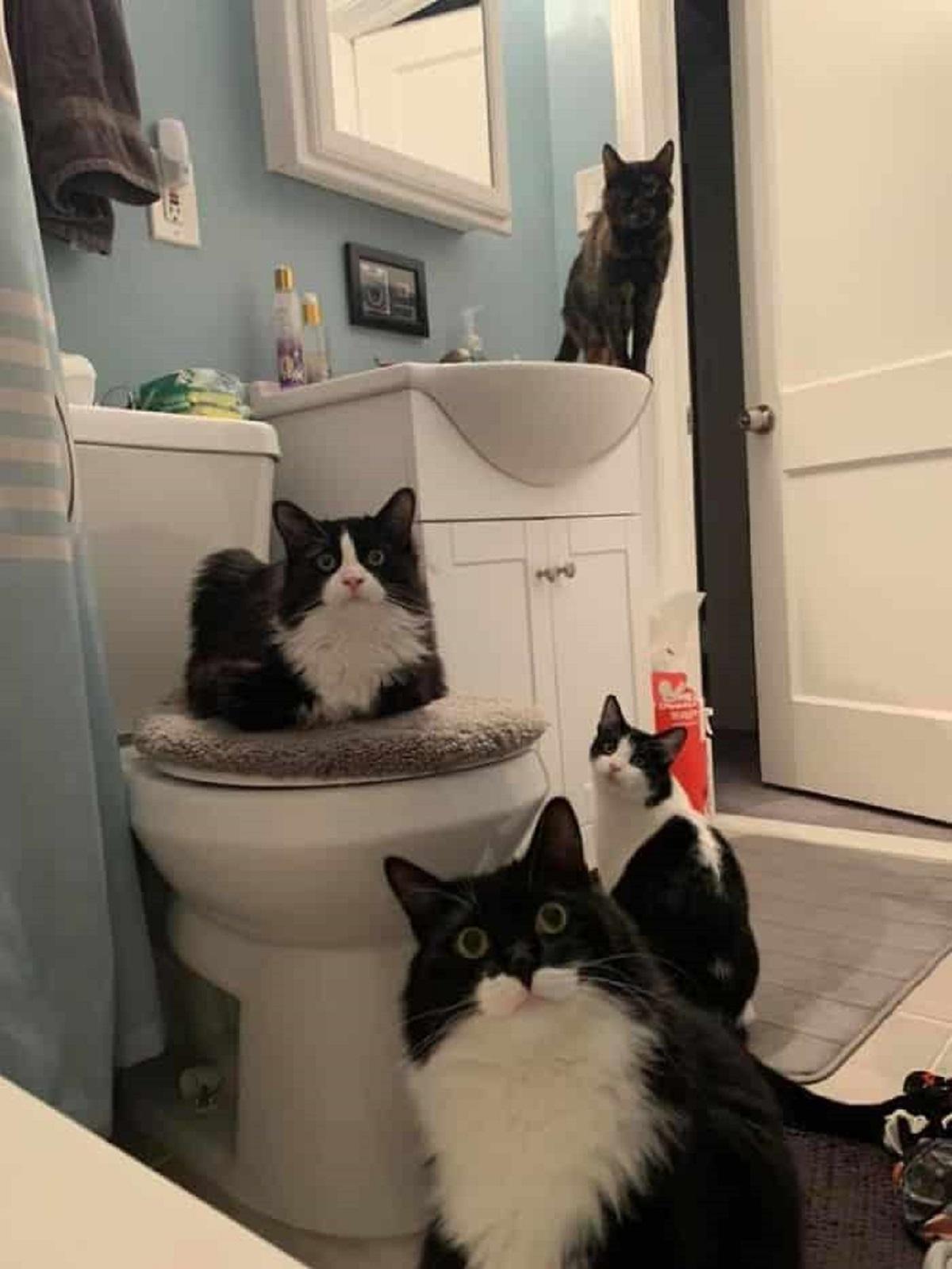 8 foto di gatti-coalizione in bagno