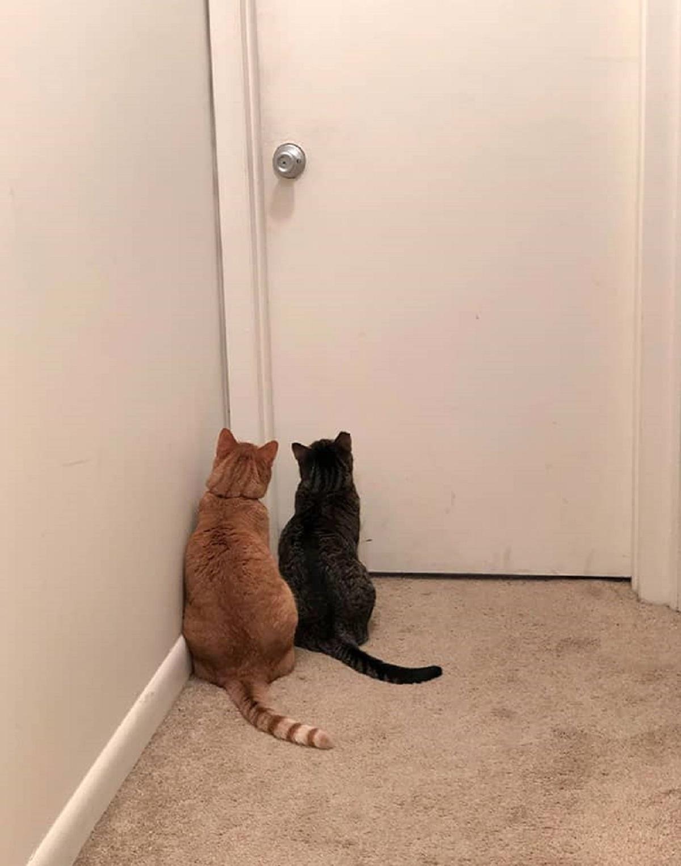 gatti che aspettano