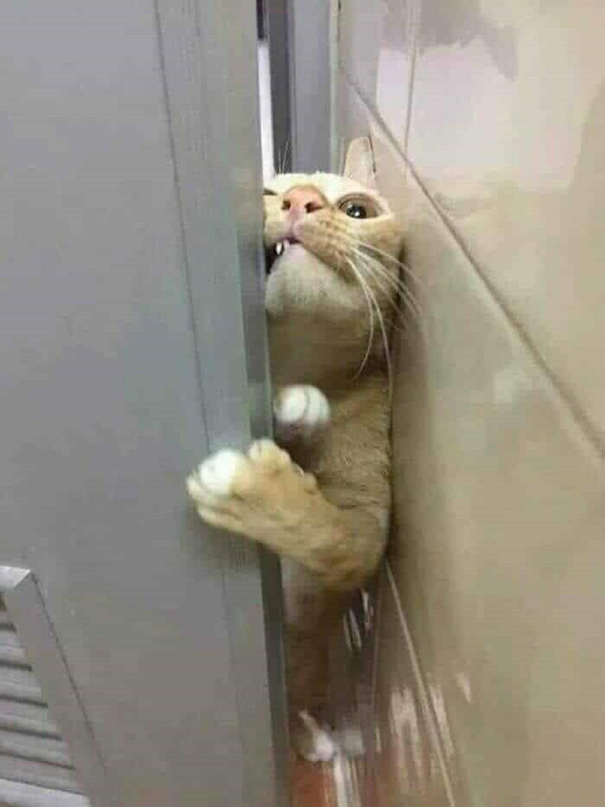 gatto impertinente