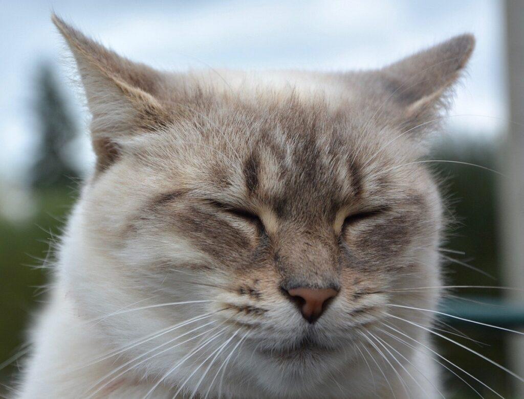 tenero gatto foto