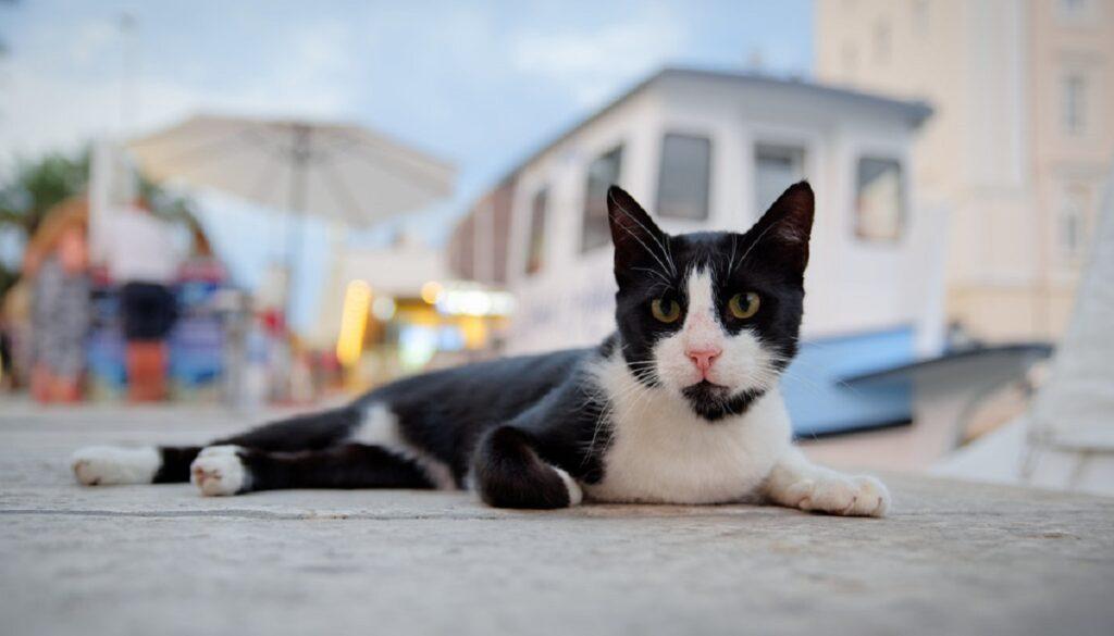 gatto relax strada