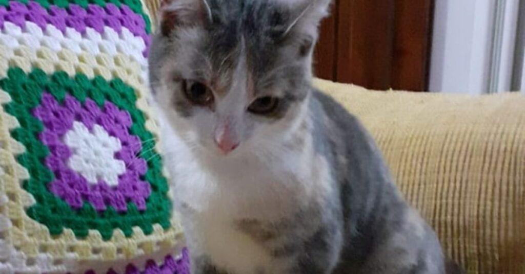 gattina seduta sul divano