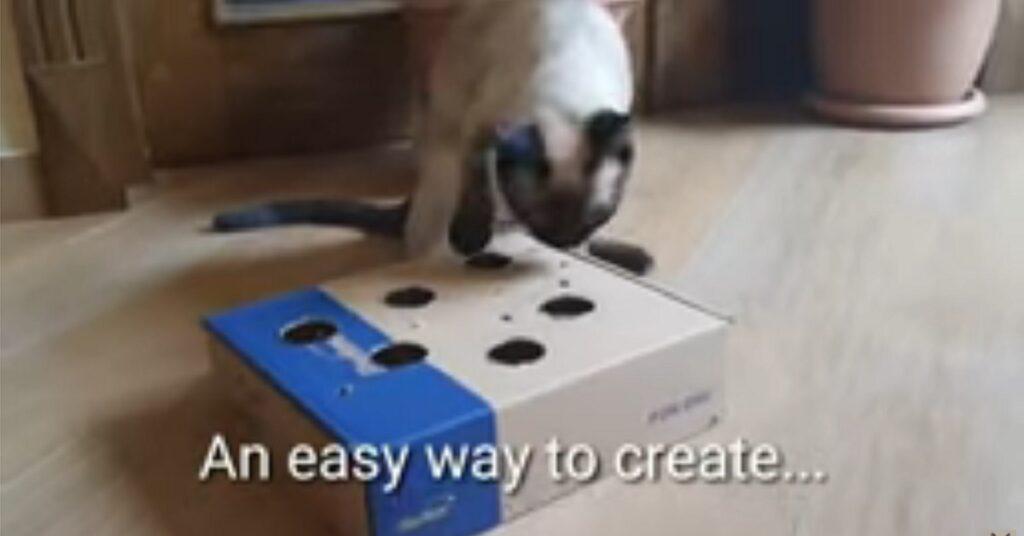 Gattino siamese si diverte con la scatola giocattolo fatta dal padrone