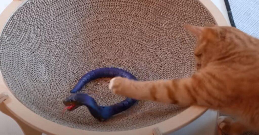 Gatto che gioca con un serpente finto