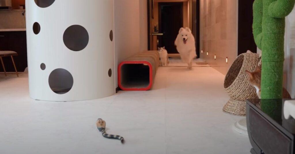 Gatto e cane che corrono