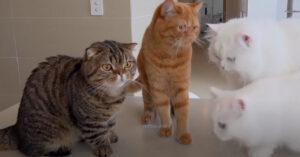 Gatti osservano