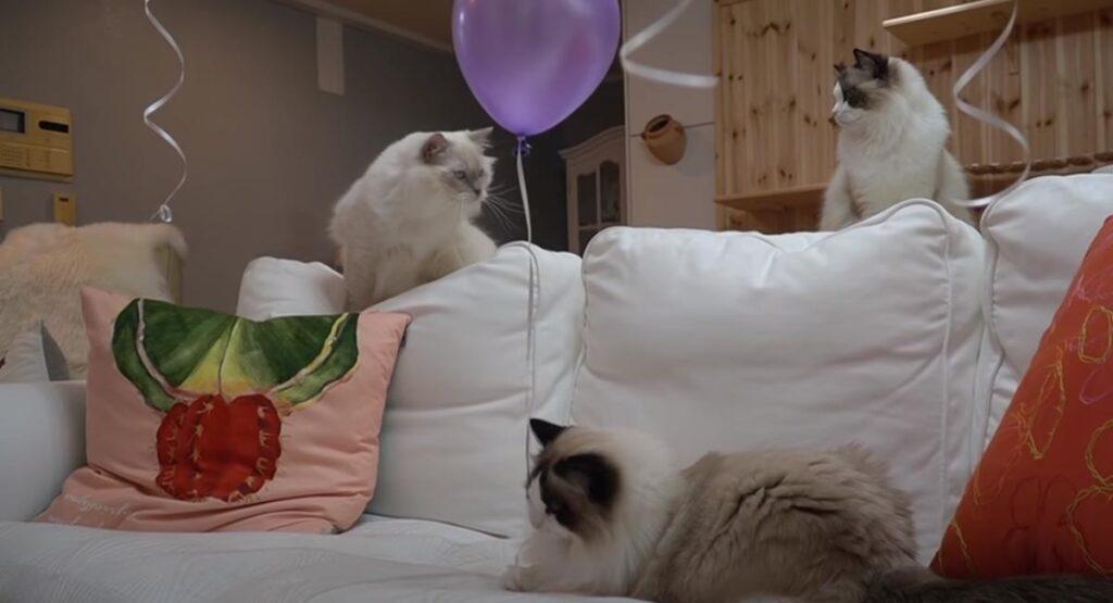 Gatti con un palloncino