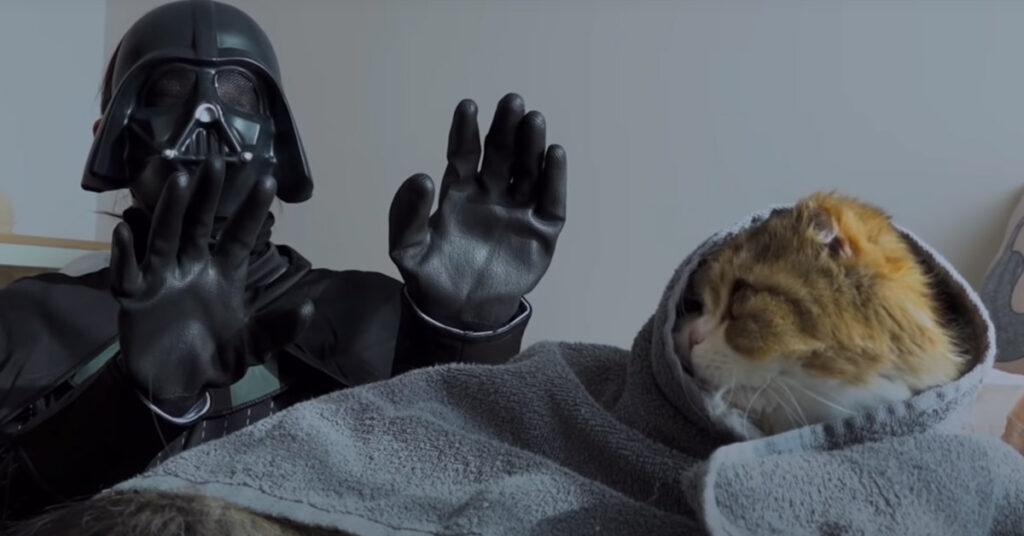 Gatto contro Darth Vader