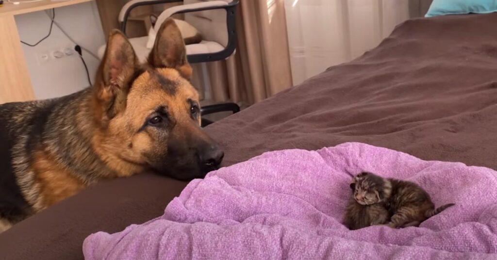 Cuccioli di felini osservati da un cane