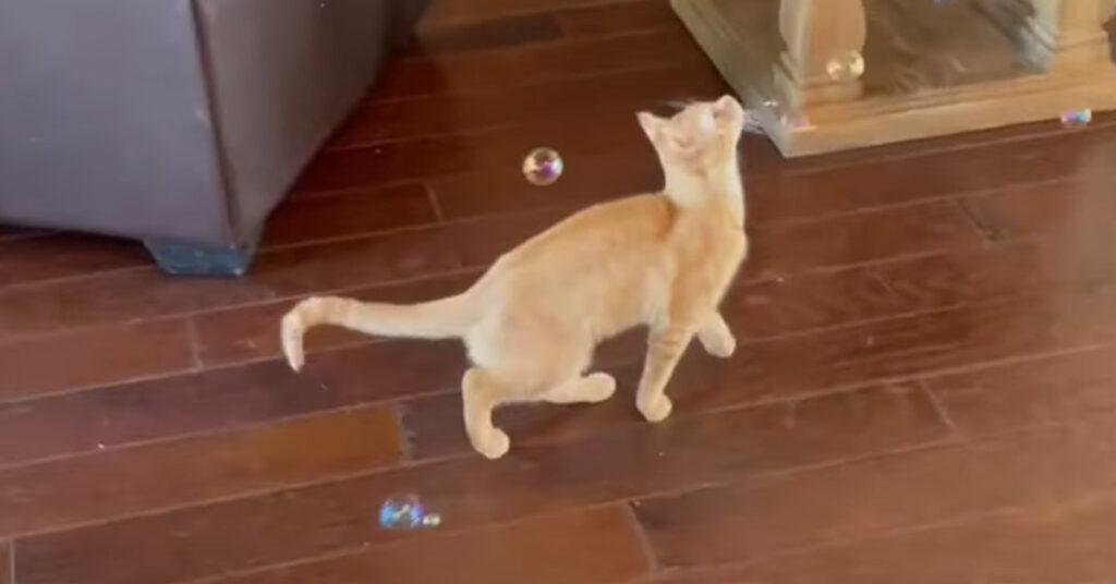Gatto che gioca con le bolle di sapone