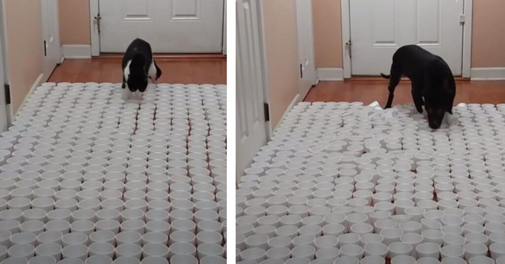 Gatto e cane che affrontano un percorso ad ostacoli