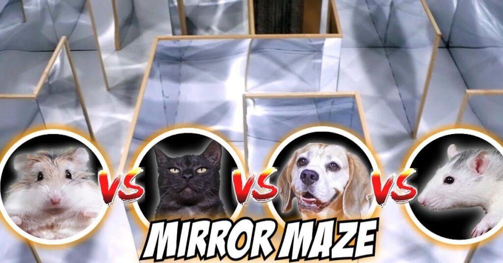 Gatto cane criceto e topo che si sfidano