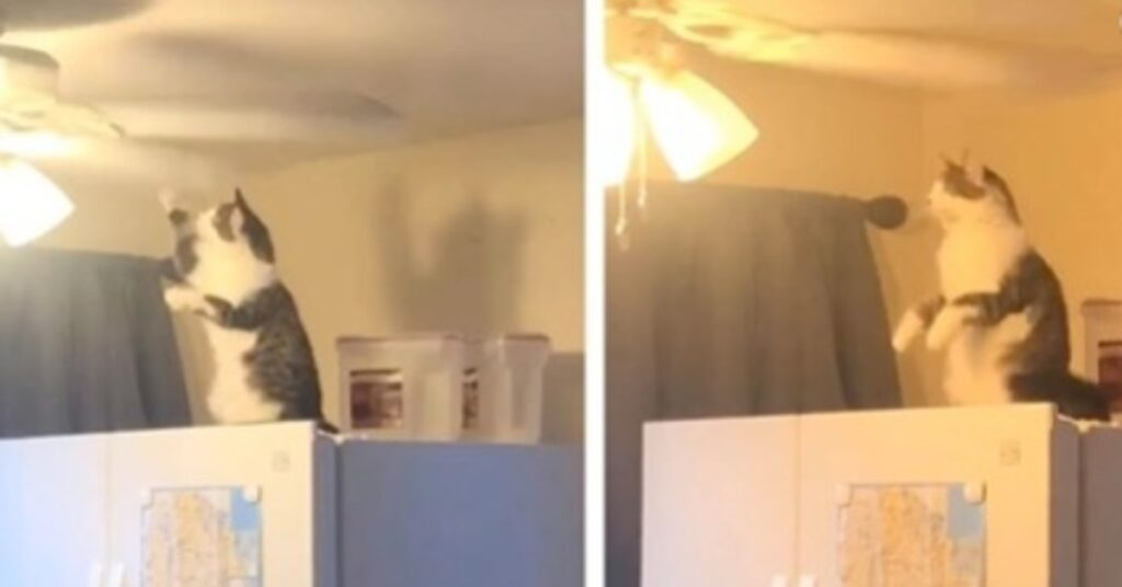 Jeffe gattino ventilatore video