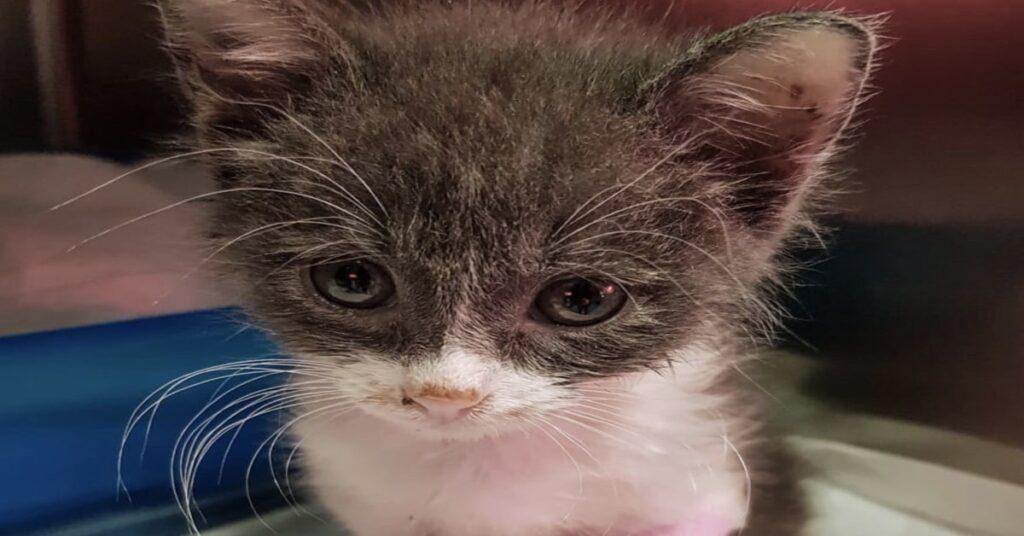 Jack gattino parvovirus