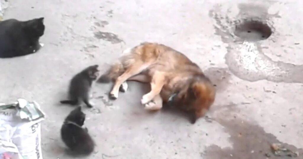 gattini con un cane