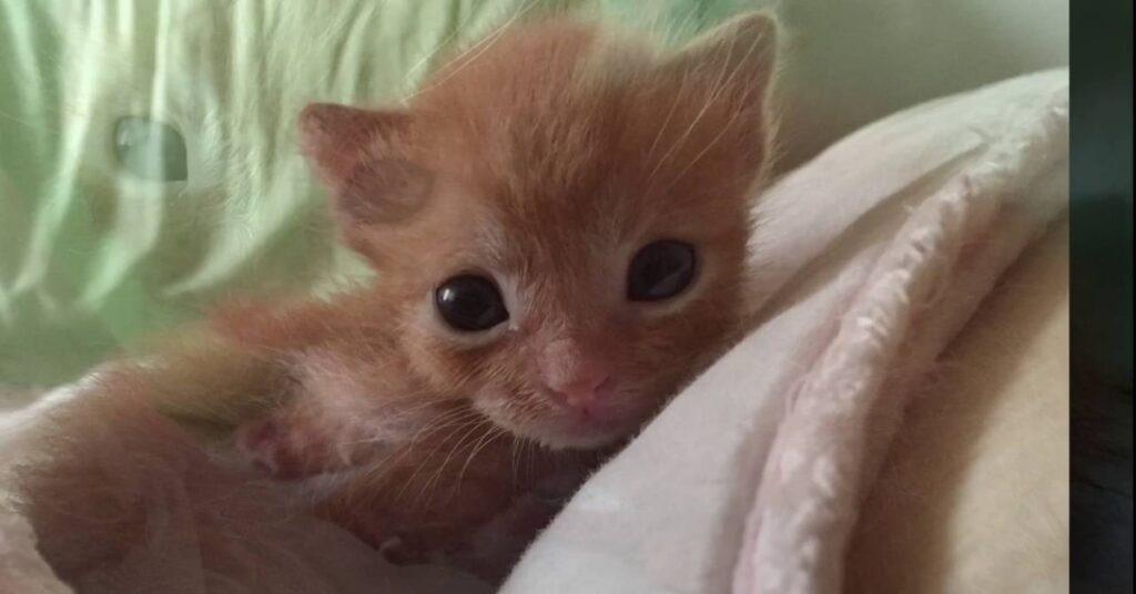 gattino rosso Magoo