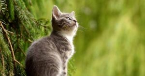 Perché i gatti miagolano agli uccelli