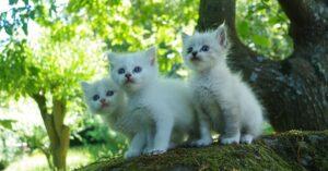 Perché i gatti usano la lettiera? Ecco come mai la preferiscono